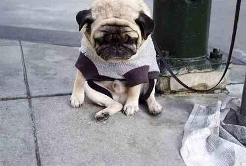 3167 Самый грустный пес в мире