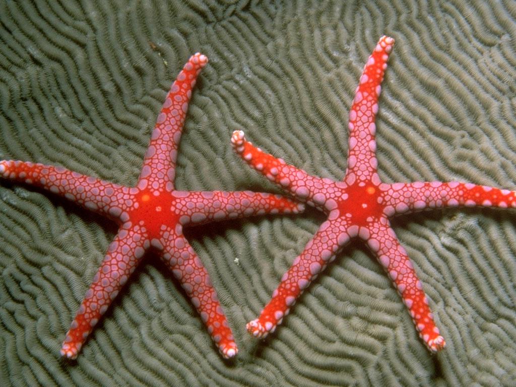 3243 Морские звезды в фотографиях