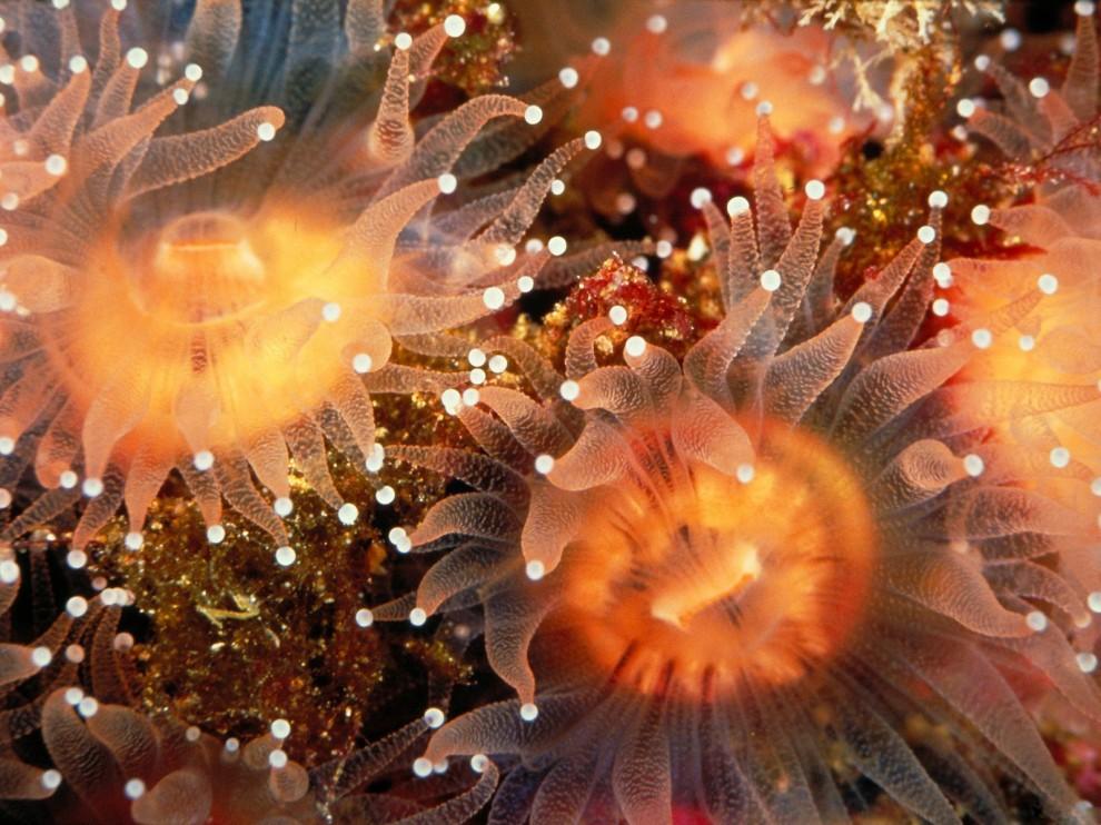 http://bigpicture.ru/wp-content/uploads/2011/11/351-990x742.jpg