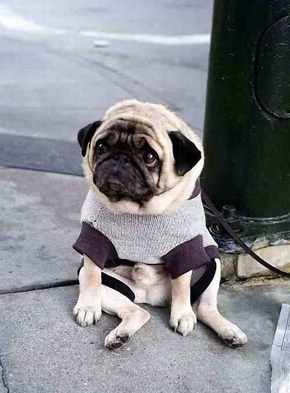 4135 Самый грустный пес в мире