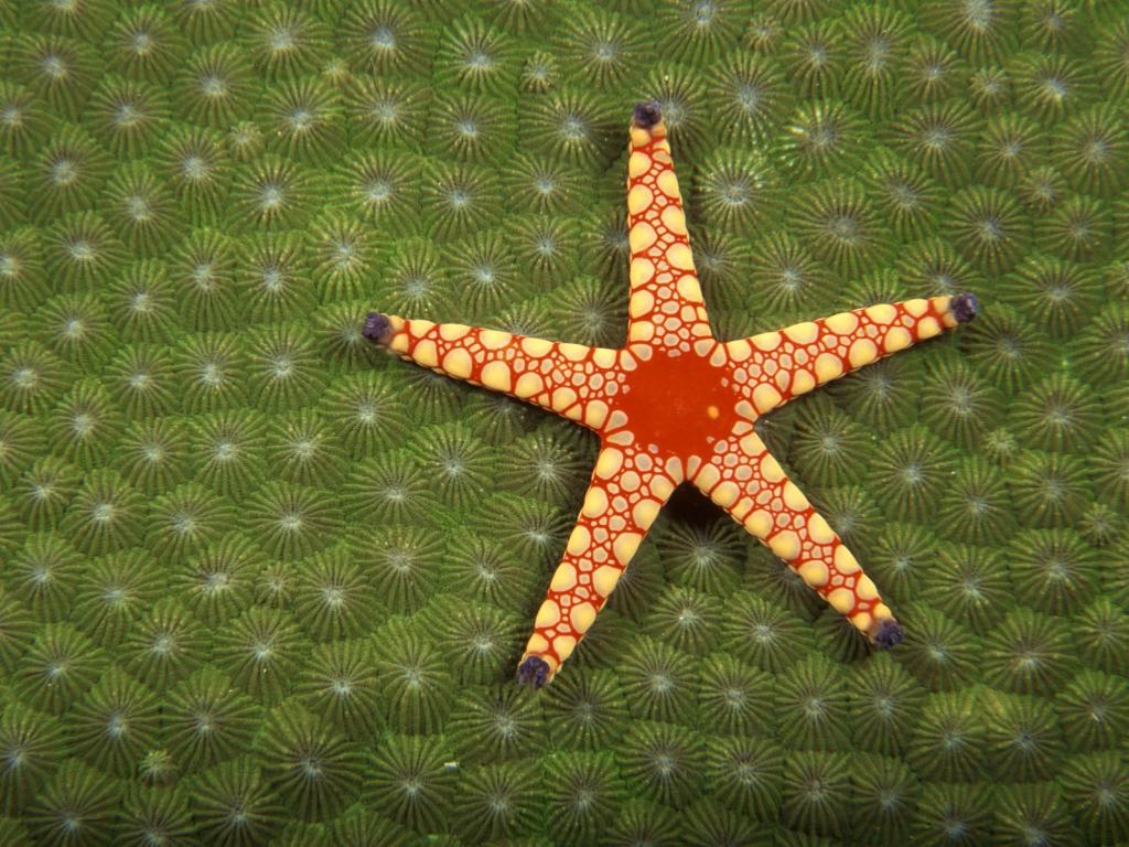 4188 Морские звезды в фотографиях
