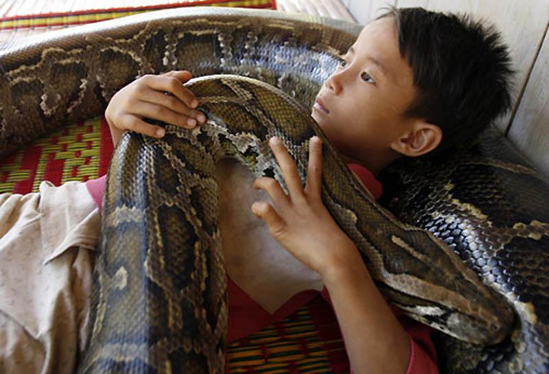 4209 Rumah python
