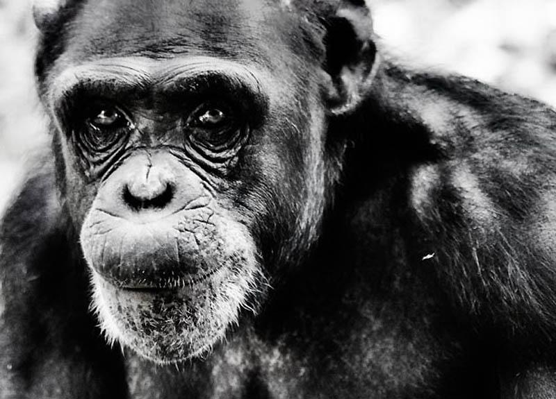 465 Планета обезьян