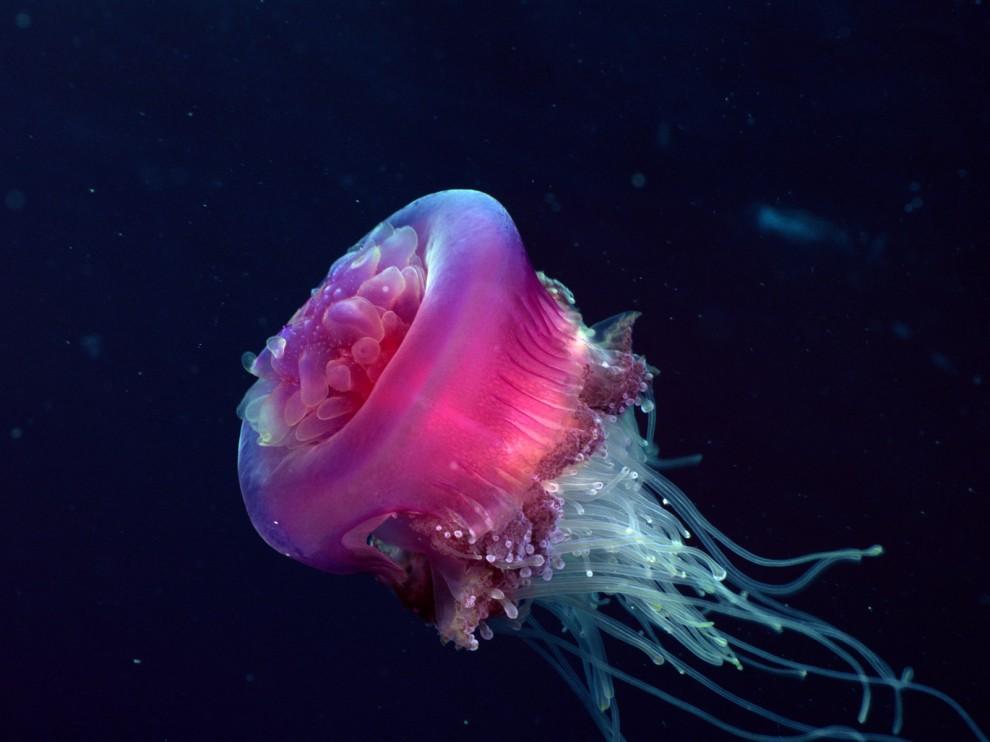 http://bigpicture.ru/wp-content/uploads/2011/11/49-990x742.jpg