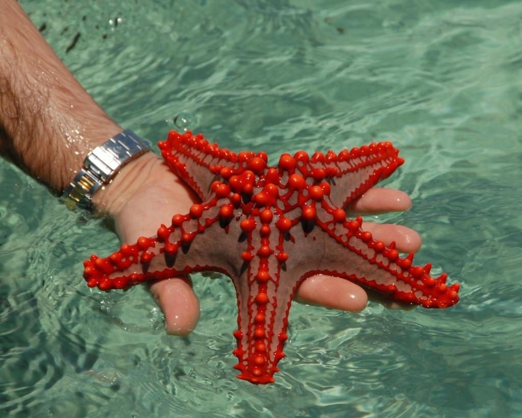 5161 Морские звезды в фотографиях