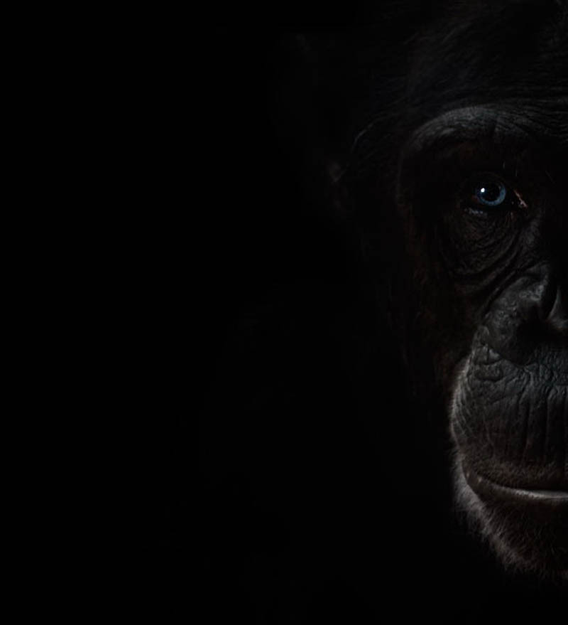 549 Планета обезьян