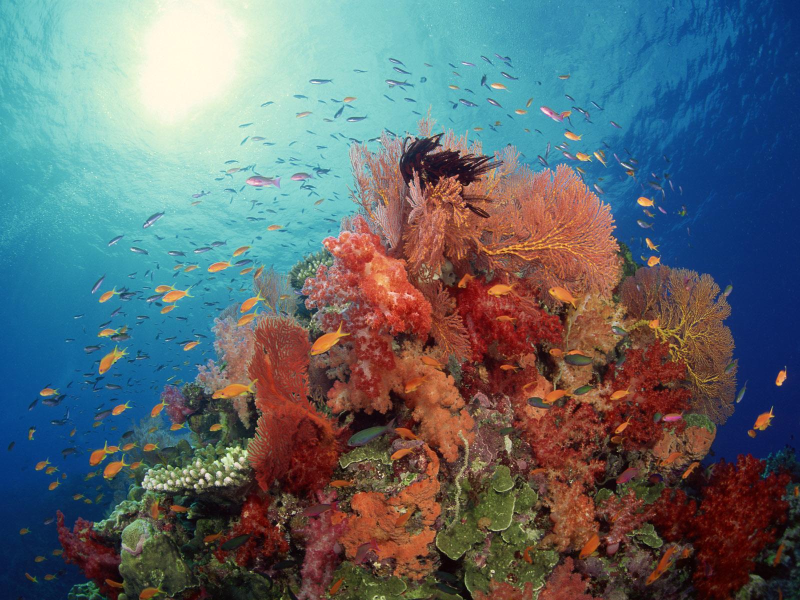 Красота подводный мир картинки оформлении