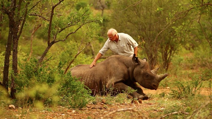 585 Как перевезти носорога? На вертолете вверх тормашками!