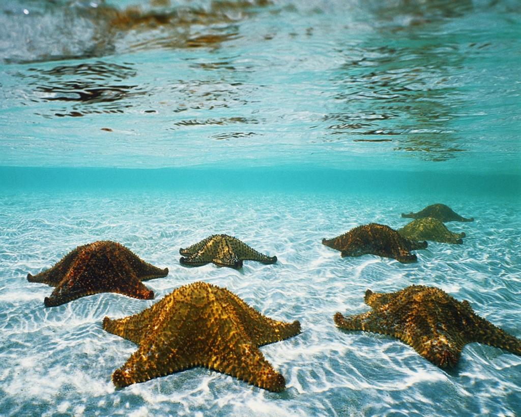 Картинки, Шпалери Морські зірки