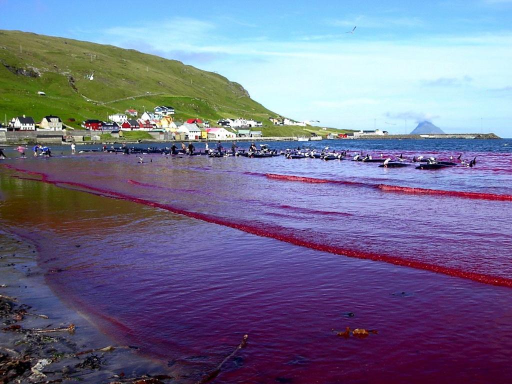 6194 Море крови на Фарерских островах