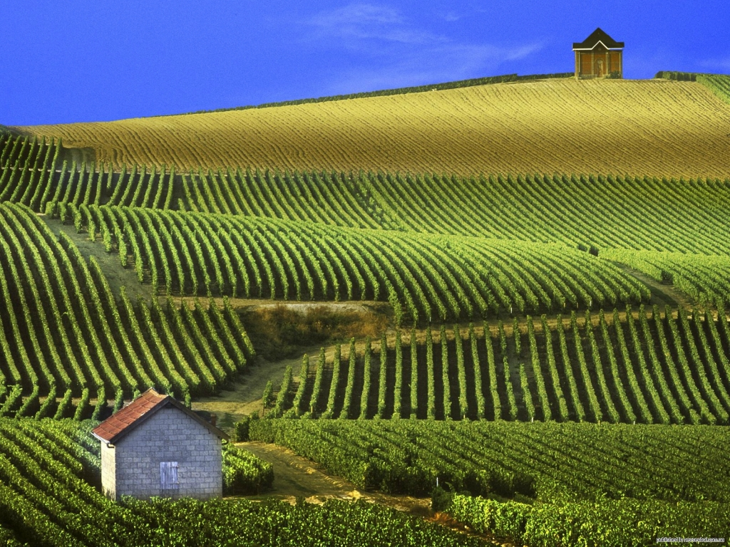 6204 Виноградники в фотографиях