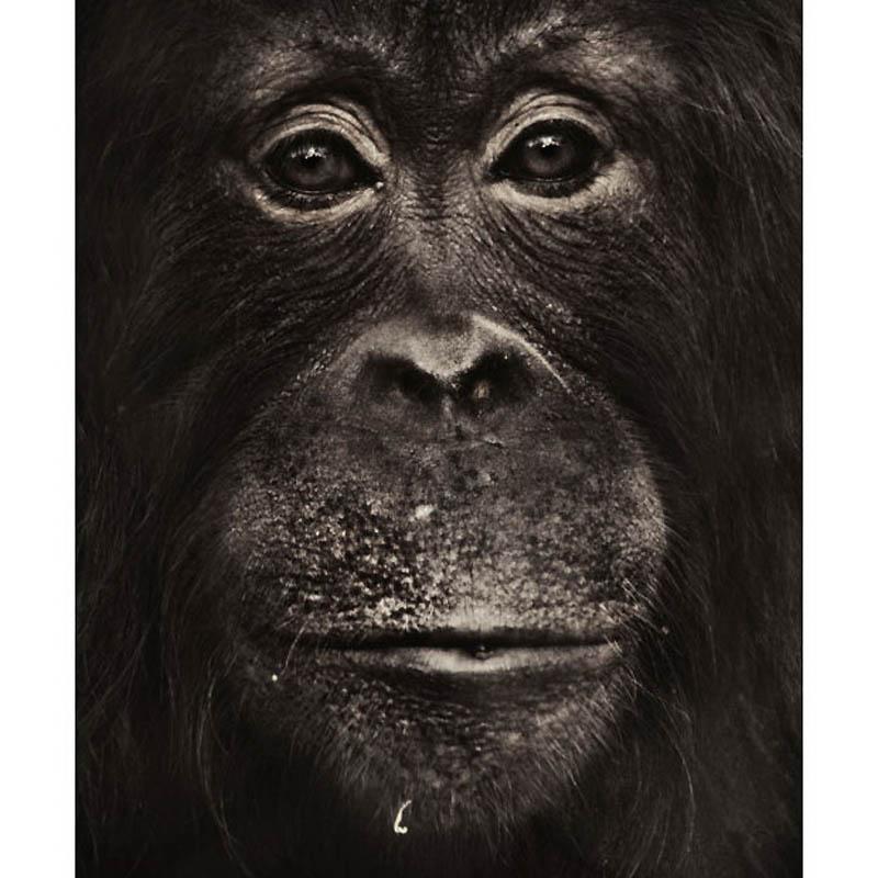 646 Планета обезьян