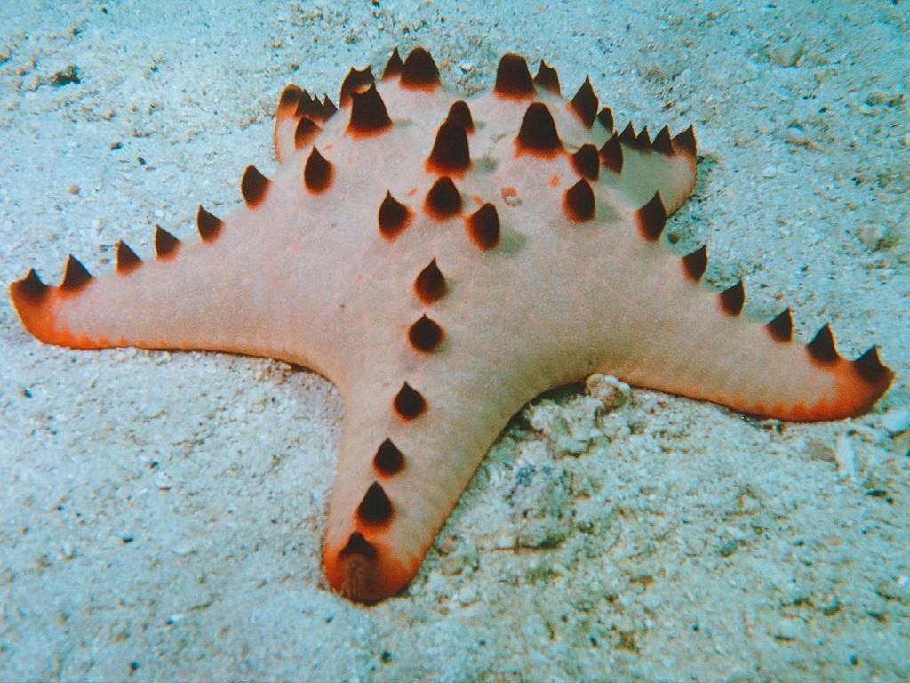 7150 Морские звезды в фотографиях