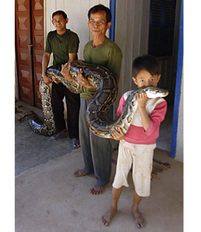 7169 Rumah python