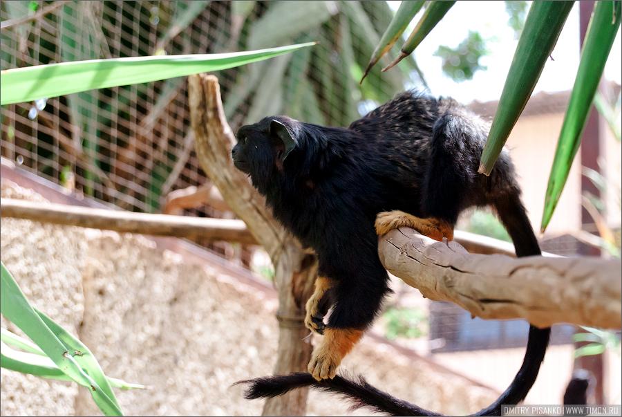 7188 Monkey Park
