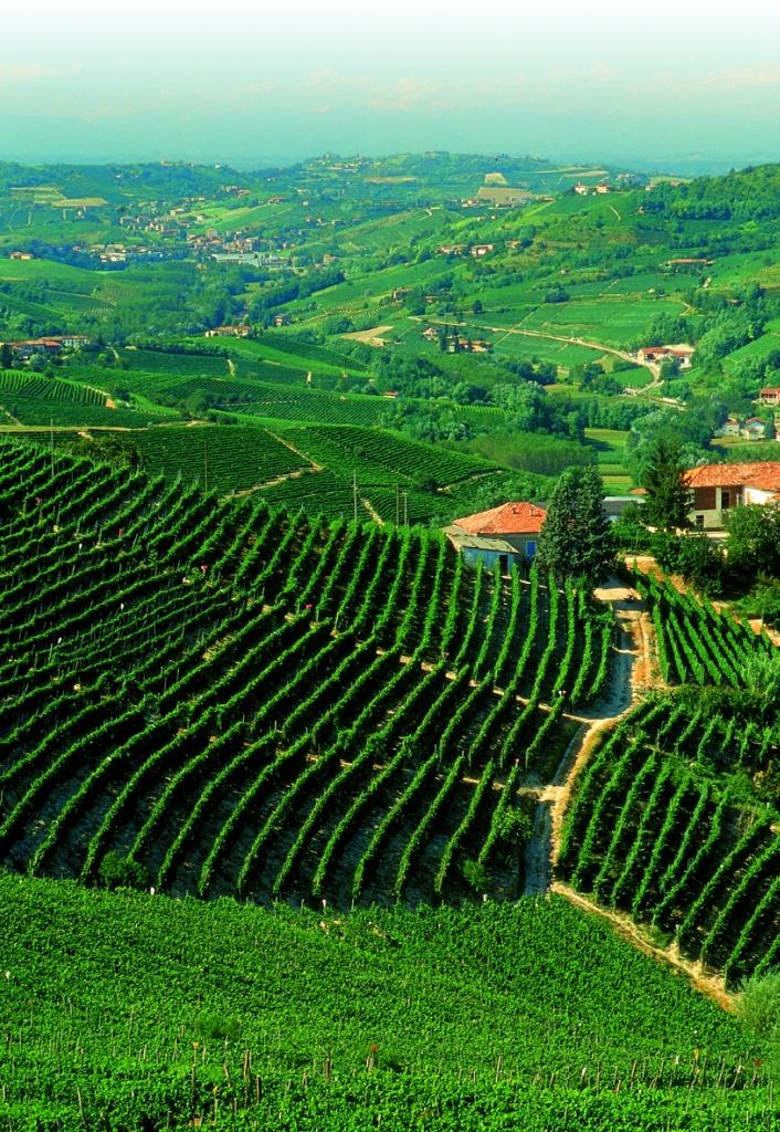 7201 Виноградники в фотографиях