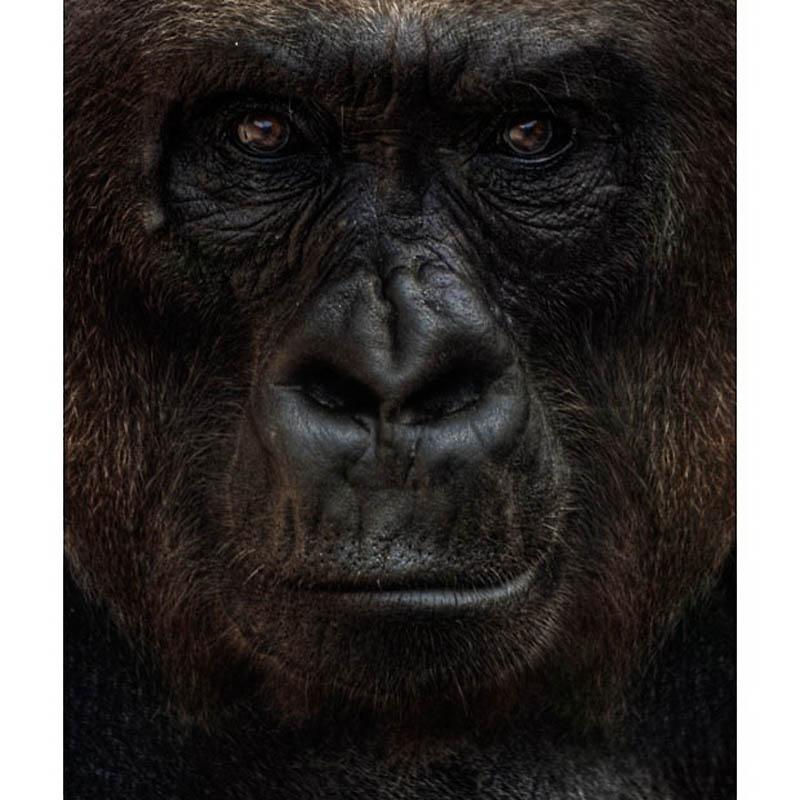746 Планета обезьян