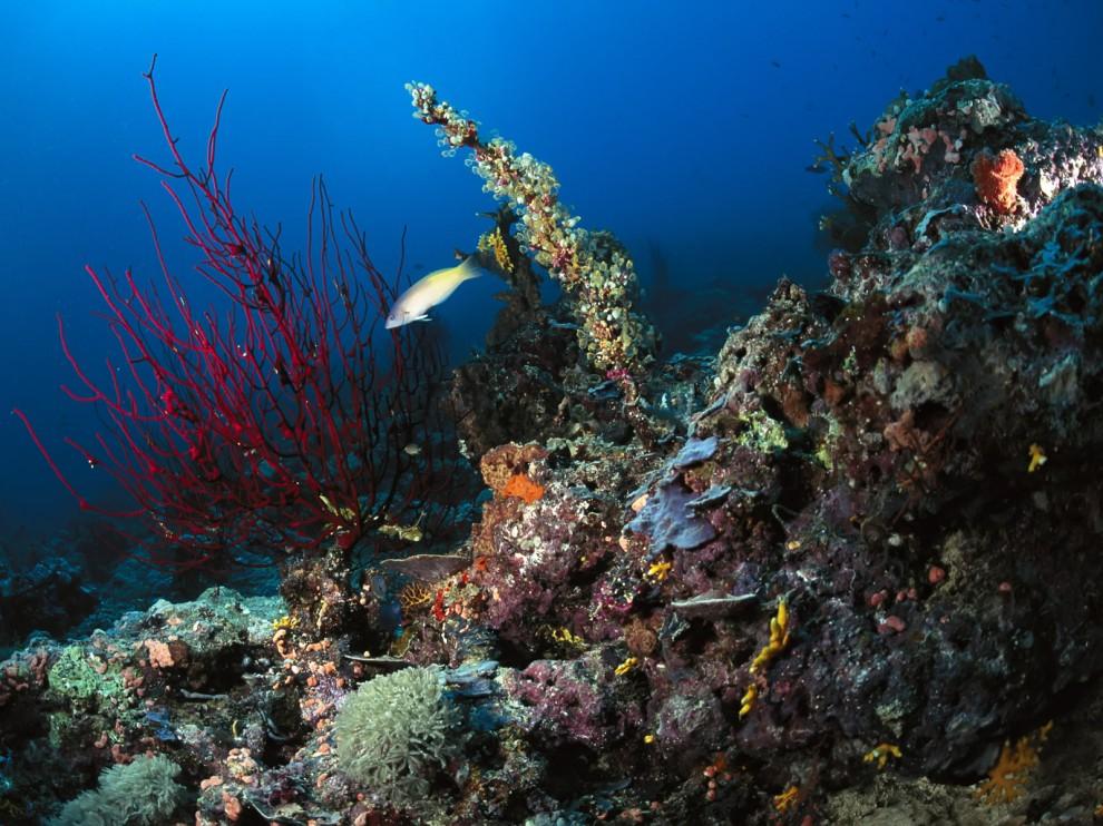 мама фото подводного мира пейзажа это письмо решил