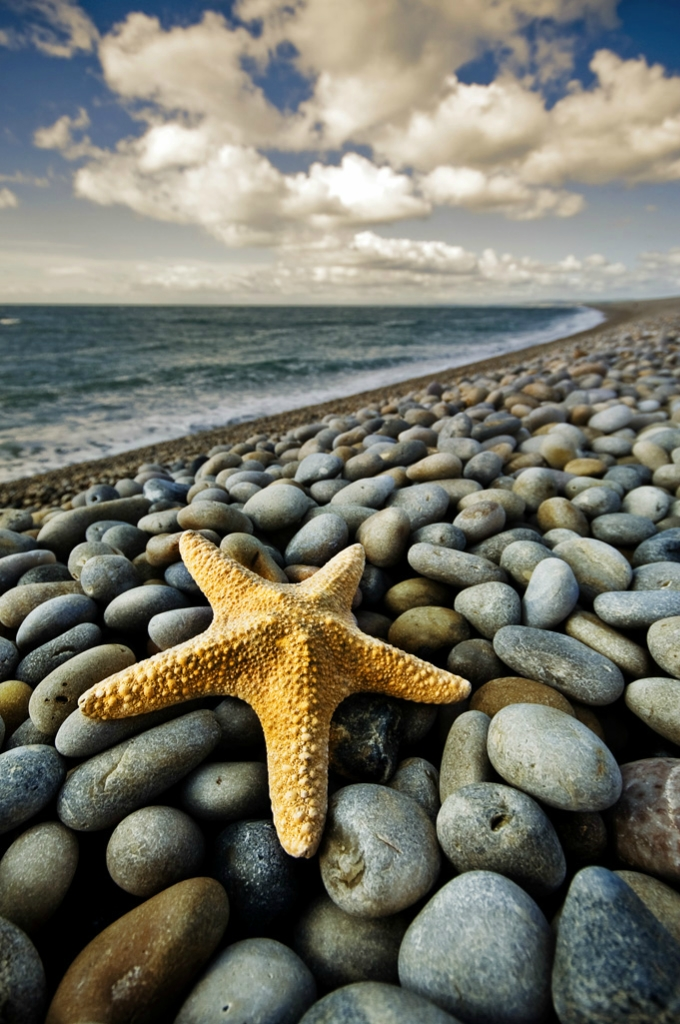 8137 Морские звезды в фотографиях
