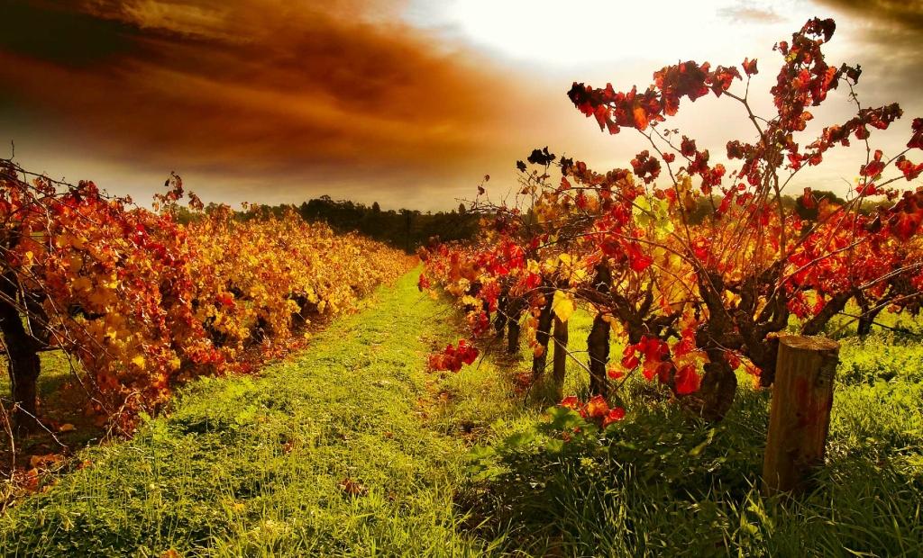 8188 Виноградники в фотографиях