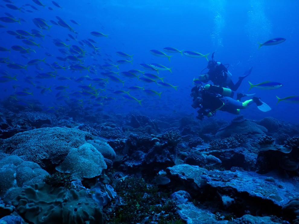 Красота подводный мир картинки подушки