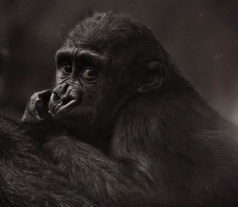 842 Планета обезьян