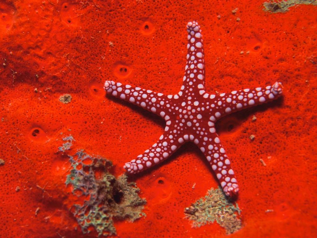 9121 Морские звезды в фотографиях