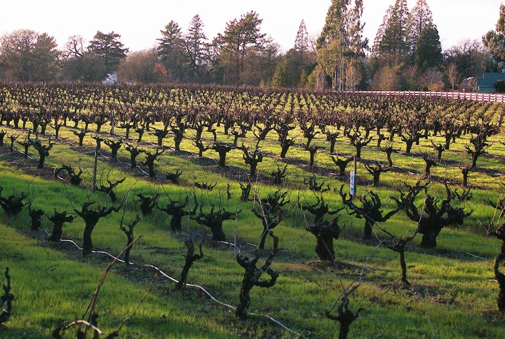 9170 Виноградники в фотографиях