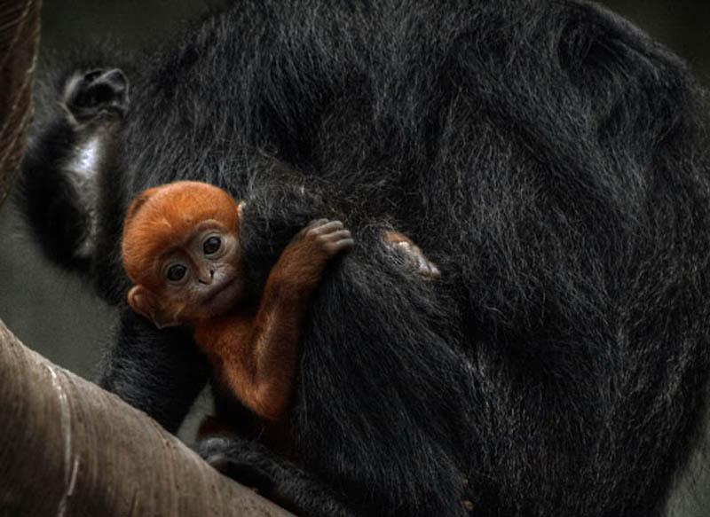 938 Планета обезьян