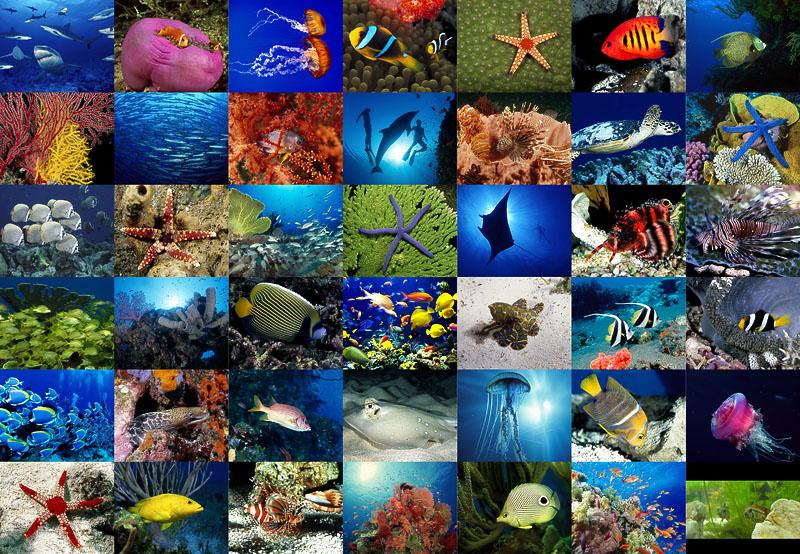 Стола красоты подводного мира