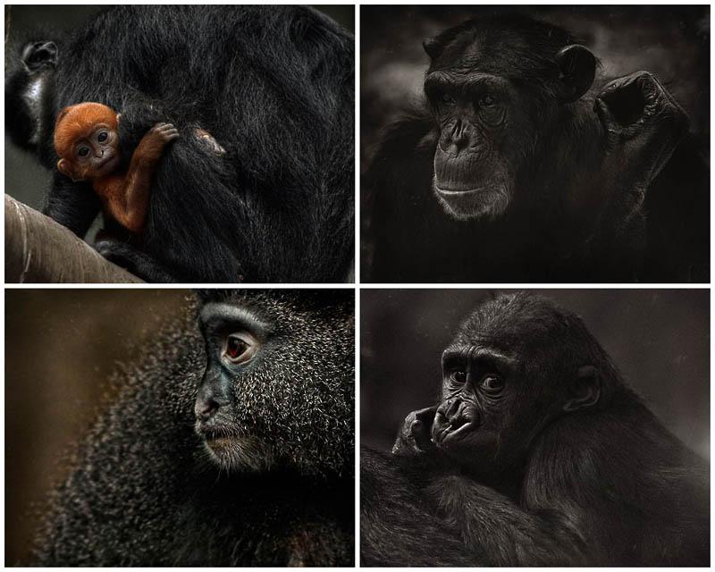 BIGPIC39 Планета обезьян