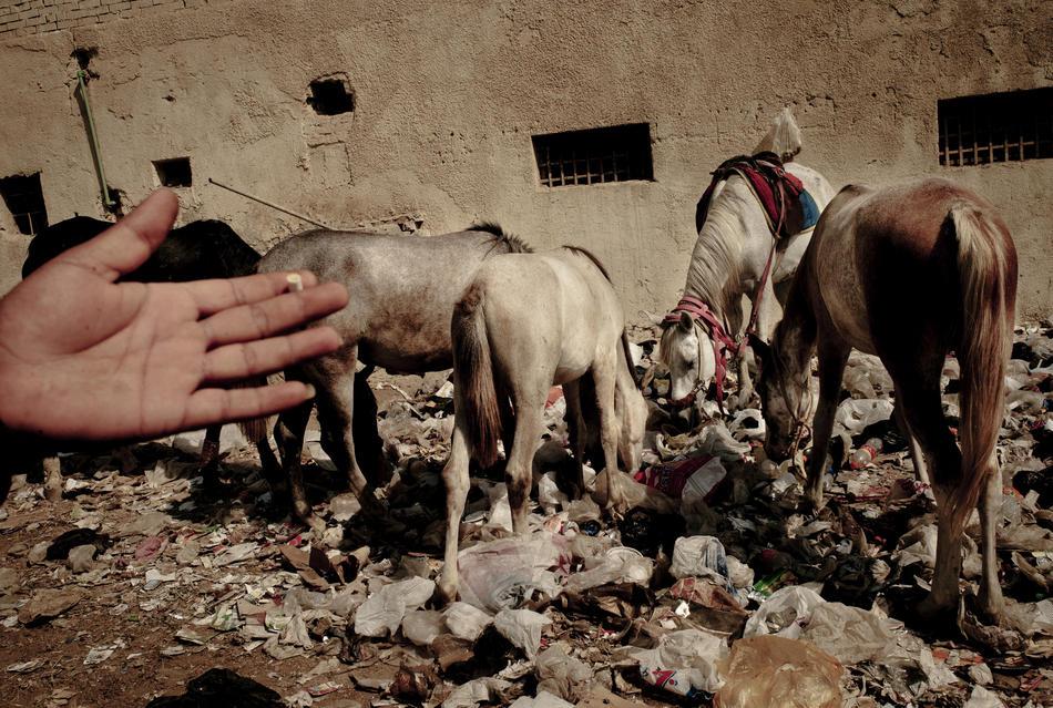 egypt15 krisis industri pariwisata di Mesir