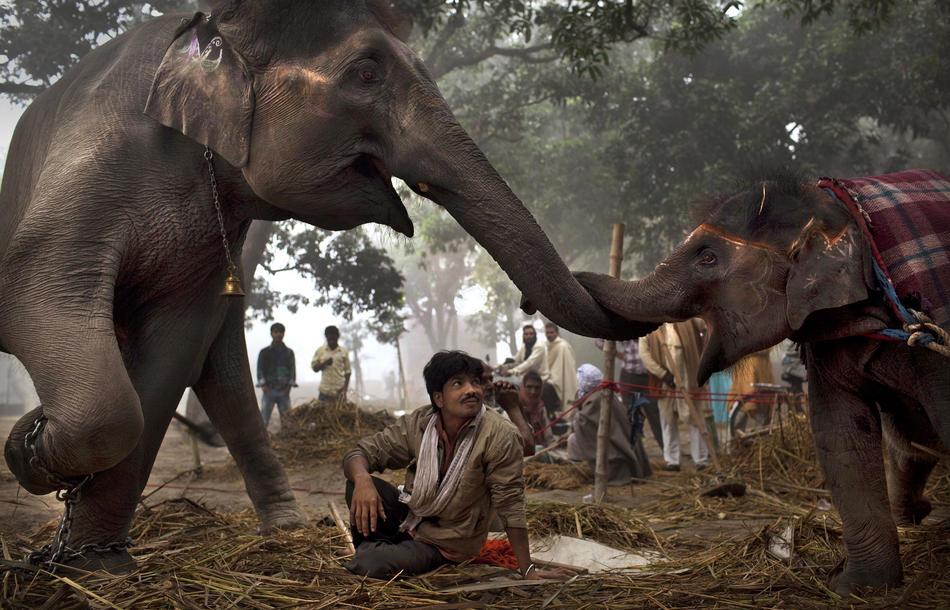 Ярмарка животных вИндии