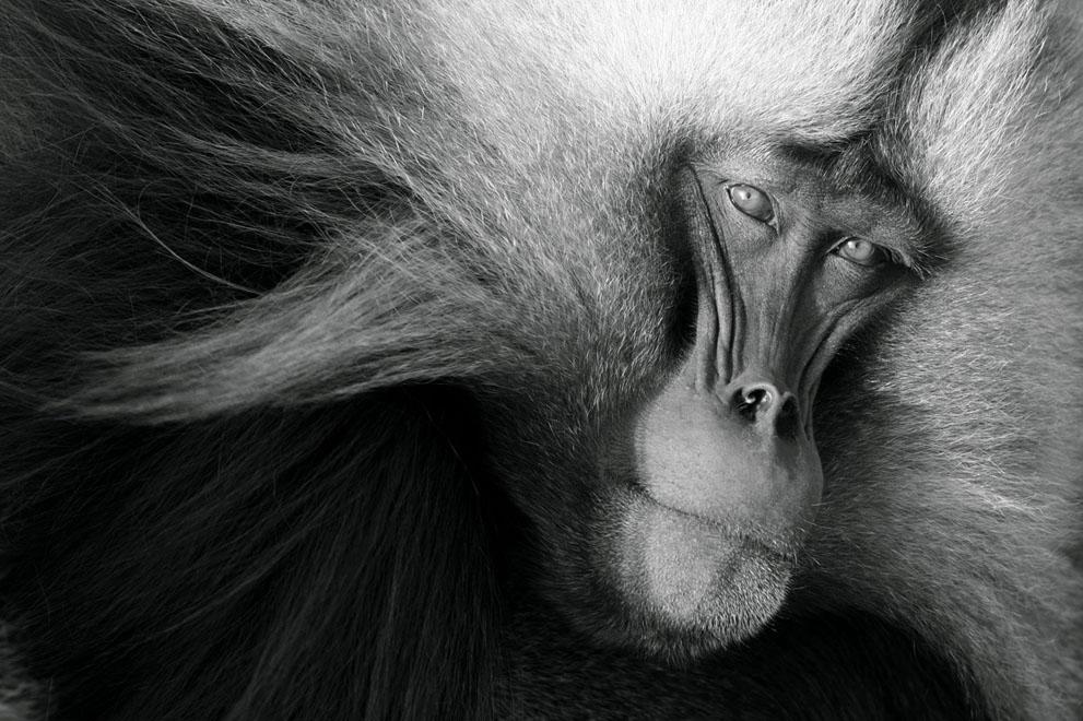 pic072 Фотоработы с конкурса National Geographic 2011