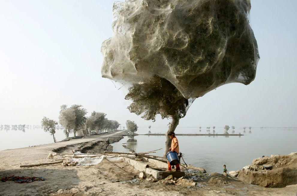 pic082 Фотоработы с конкурса National Geographic 2011