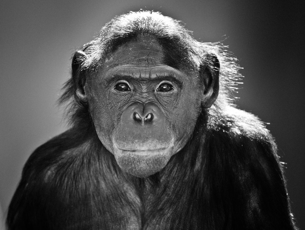 pic321 Фотоработы с конкурса National Geographic 2011