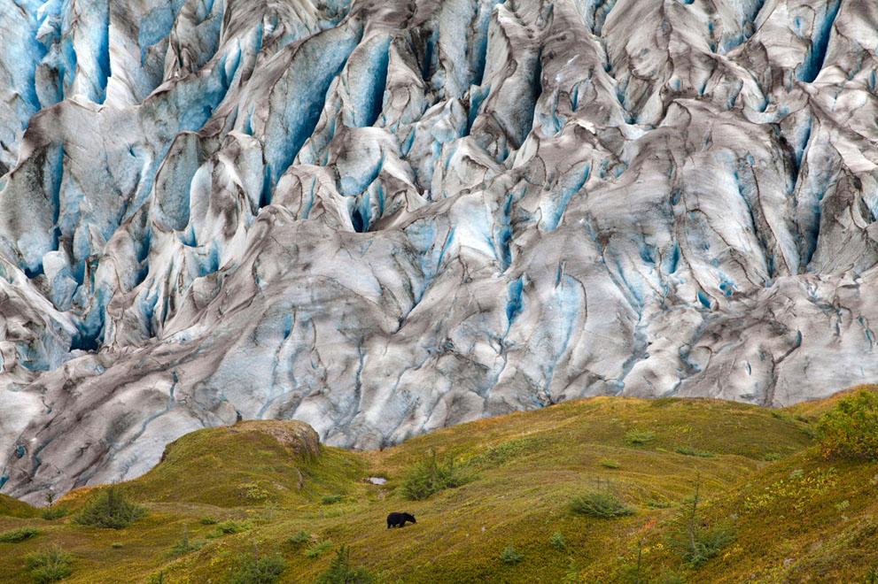 pic331 Фотоработы с конкурса National Geographic 2011