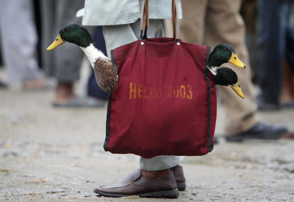 pic36 terbaik foto dari Reuters Oktober