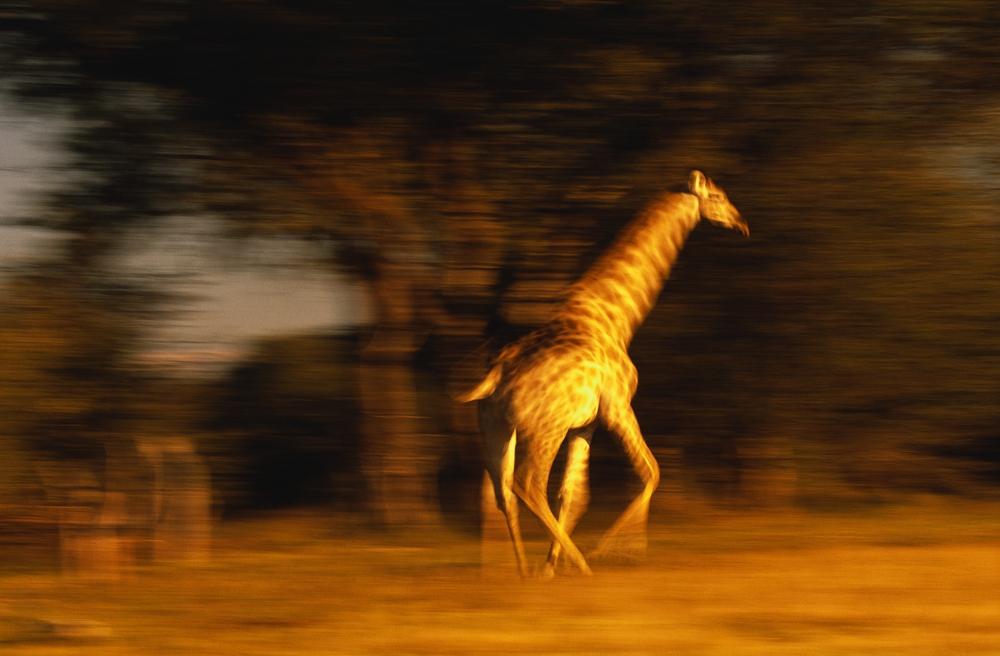 10 hewan, yang mengangkangi pria