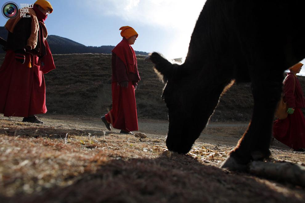 tibet 010 Тибетские монахини