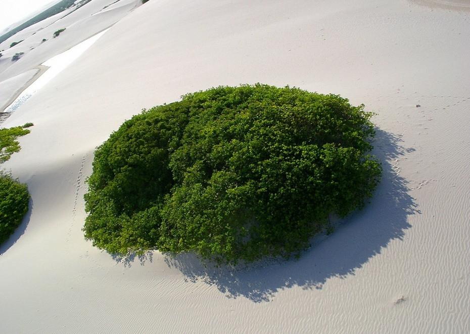 xUnoN000 Простыни Мараньяна: Белые пески Lencois Maranhenses Бразилии
