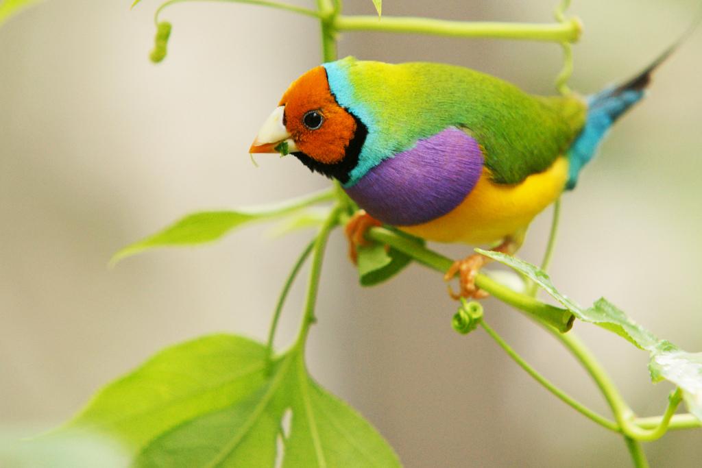 10101 40 прекрасных фотографий птиц