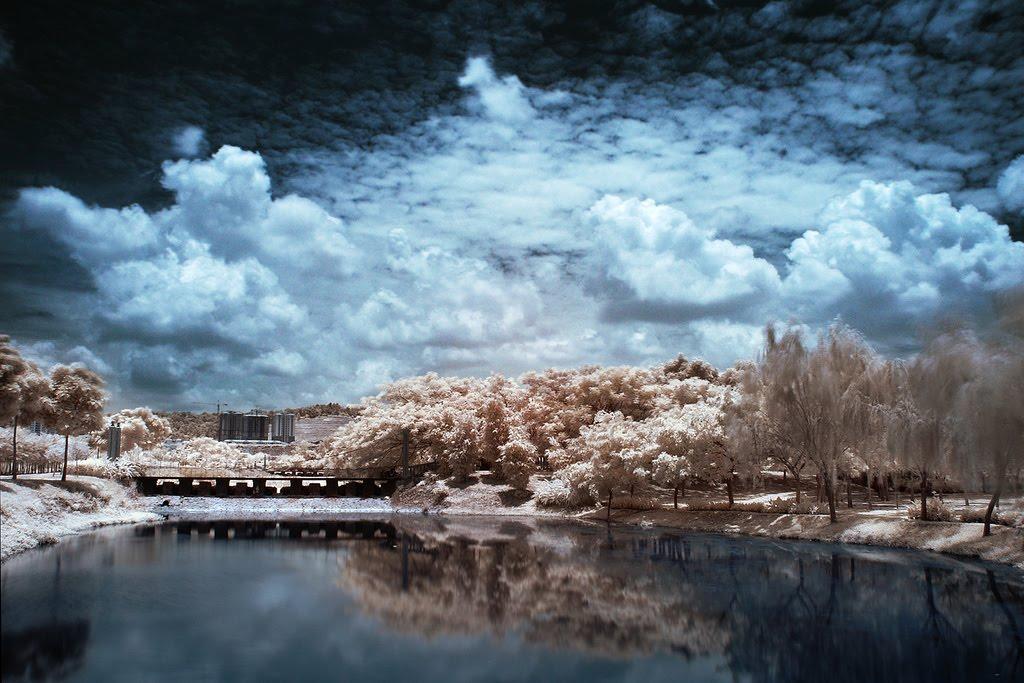 10119 Инфракрасная фотография