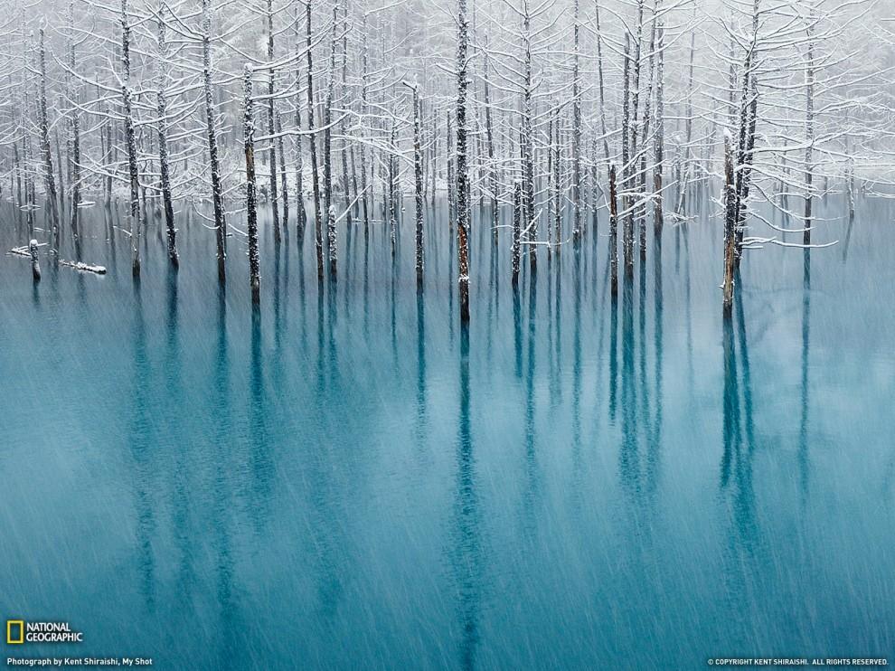 103 990x742 Лучшие фото ноября от National Geographic