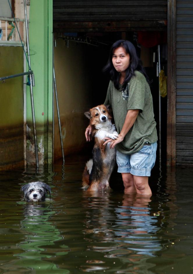 1052 50 лучших фотографий животных за 2011 год