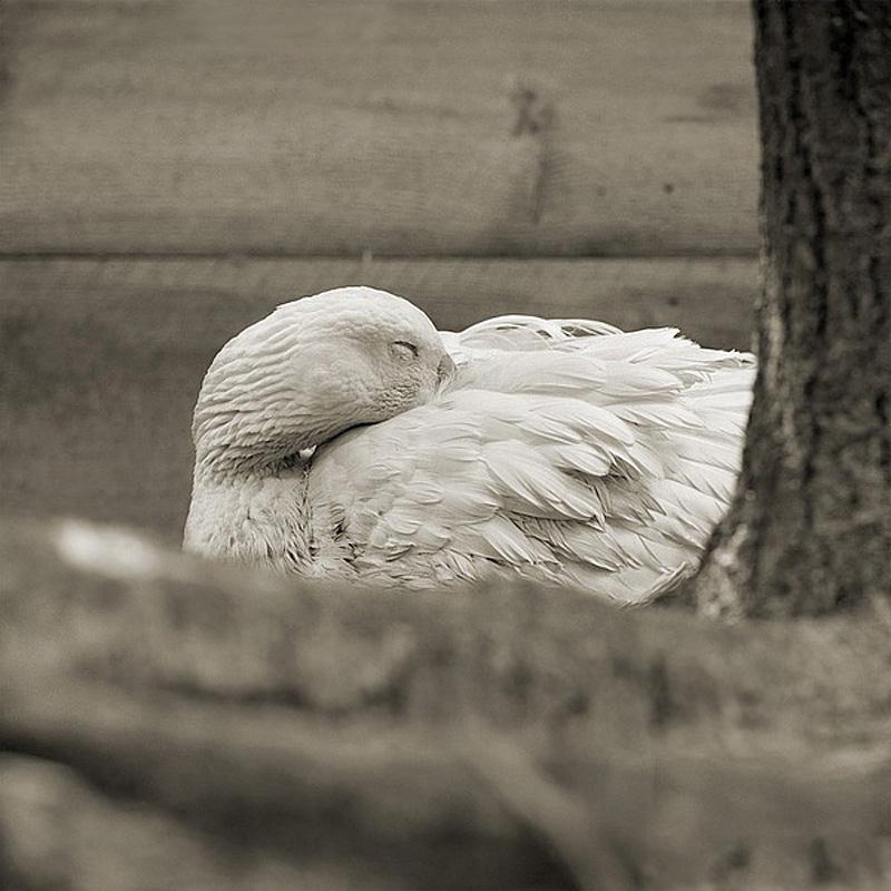 1092 Фотопроект Исы Лешко Пожилые животные