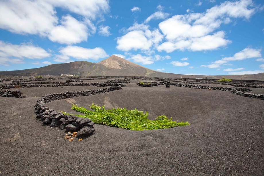 11123 Вулканические виноградники острова Лансароте
