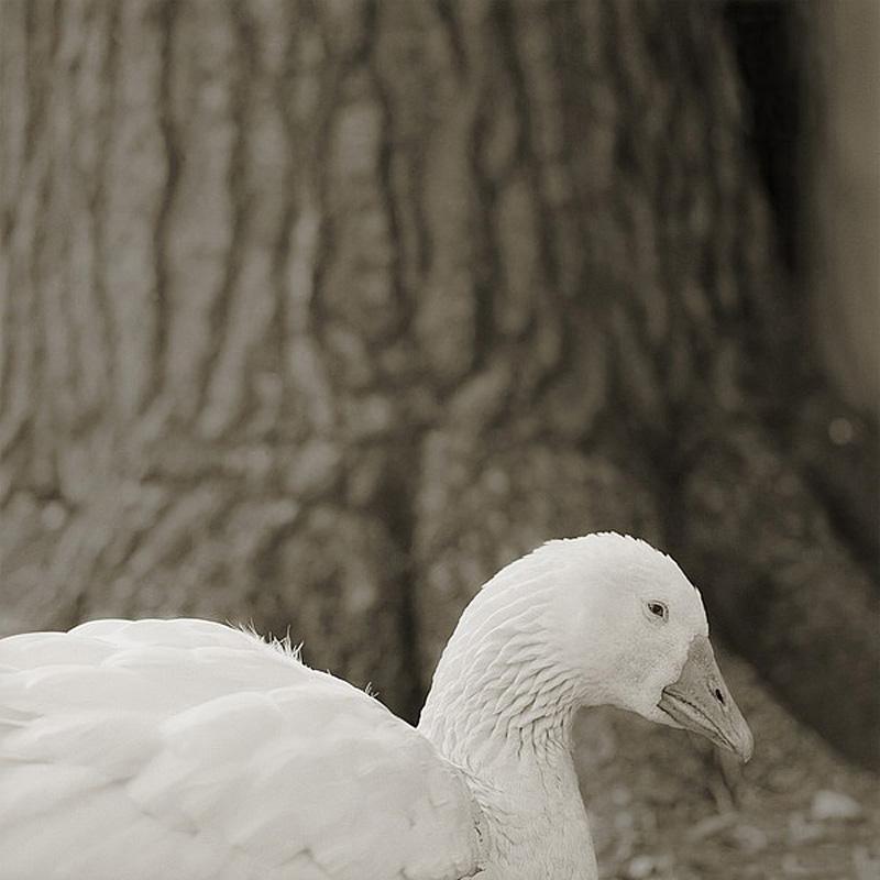 11130 Фотопроект Исы Лешко Пожилые животные