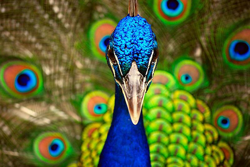 11139 40 прекрасных фотографий птиц