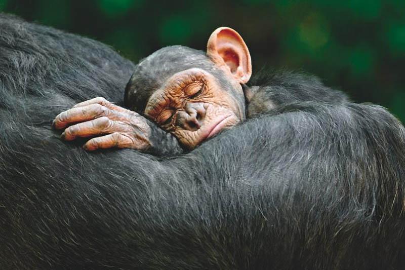 1153 Лучшие фотографии дикой природы 2011